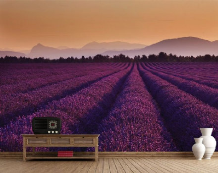 Lavender Fields in France paper wallpaper
